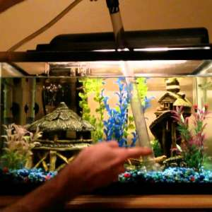 take-fresh-water-for-aquarium