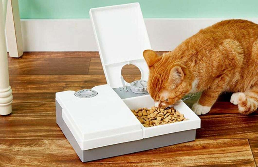 automatic cat feeder with camera