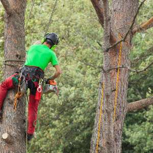professional tree service near me