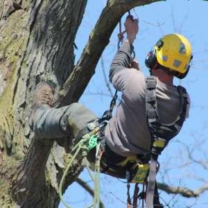 certified arborist salary
