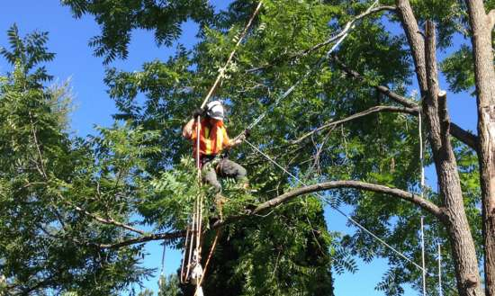 tree removal cost